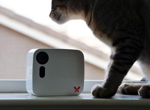Butterfleye Monitoring Camera