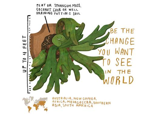 Staghorn Fern illustration