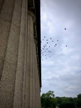 Pigeons flying from the hawk at the Pantheon