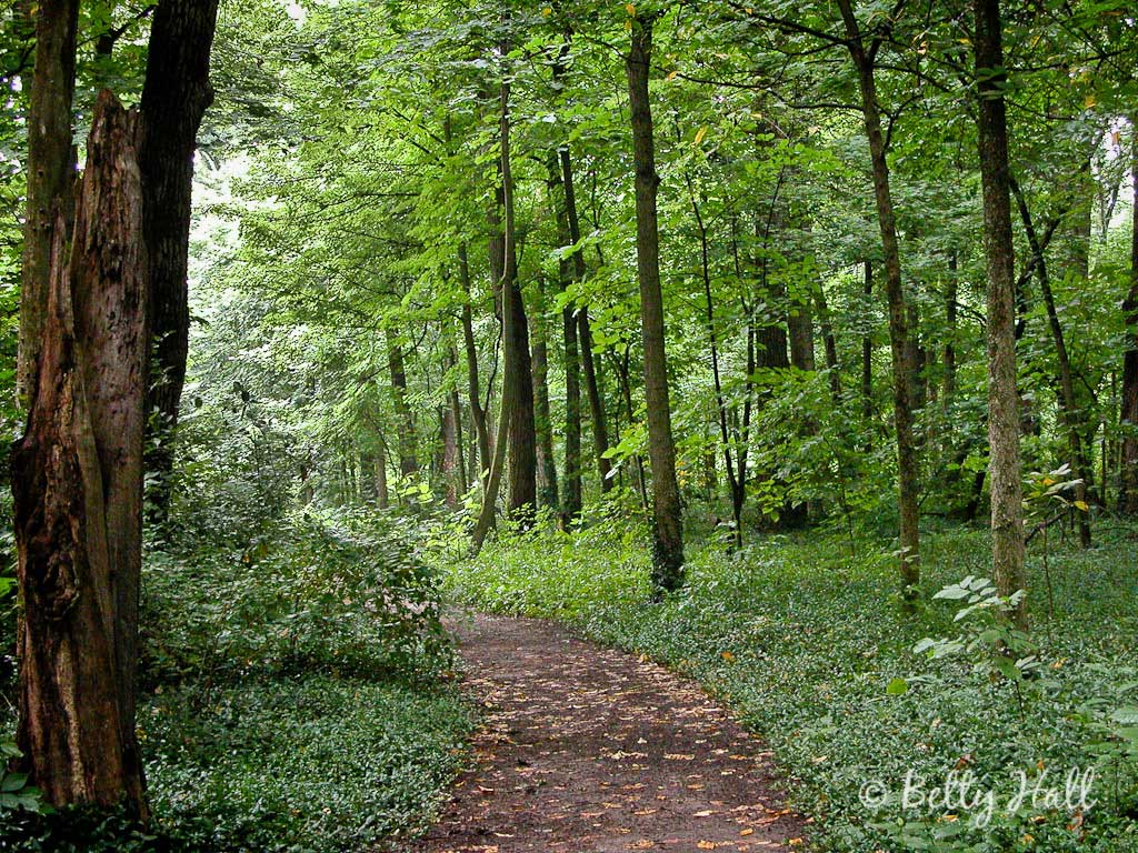 The Arboretum Lexington Kentucky State Botanical