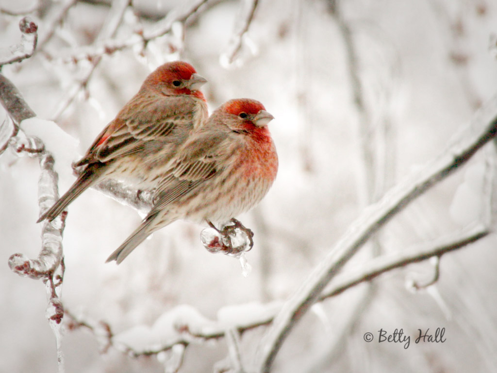 Playing In The Fall Wallpaper Birds Betty Hall Photography