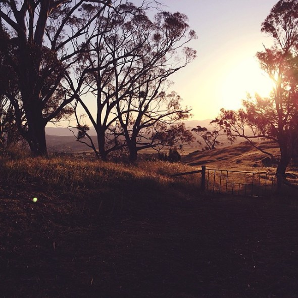 Another from Mt Painter #canberra
