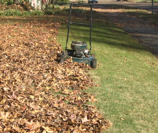 Mowing Leaves Good Lawn