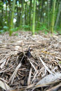 Come Coltivare Il Bamboo Della Fortuna 12 Passaggi