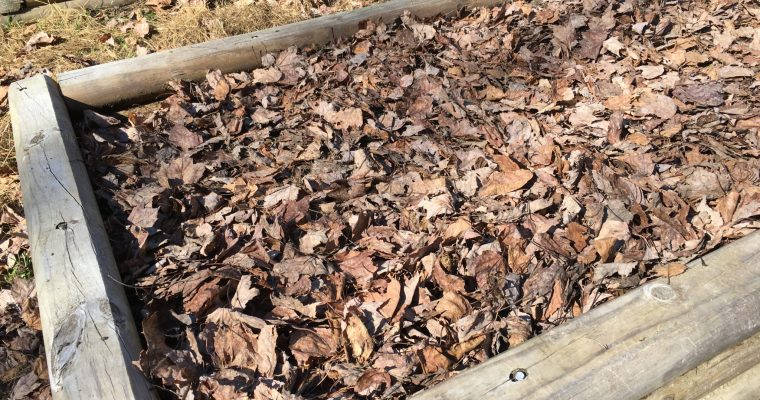 Leaves In, Compost Out: How to Make Autumn Leaves Work For You