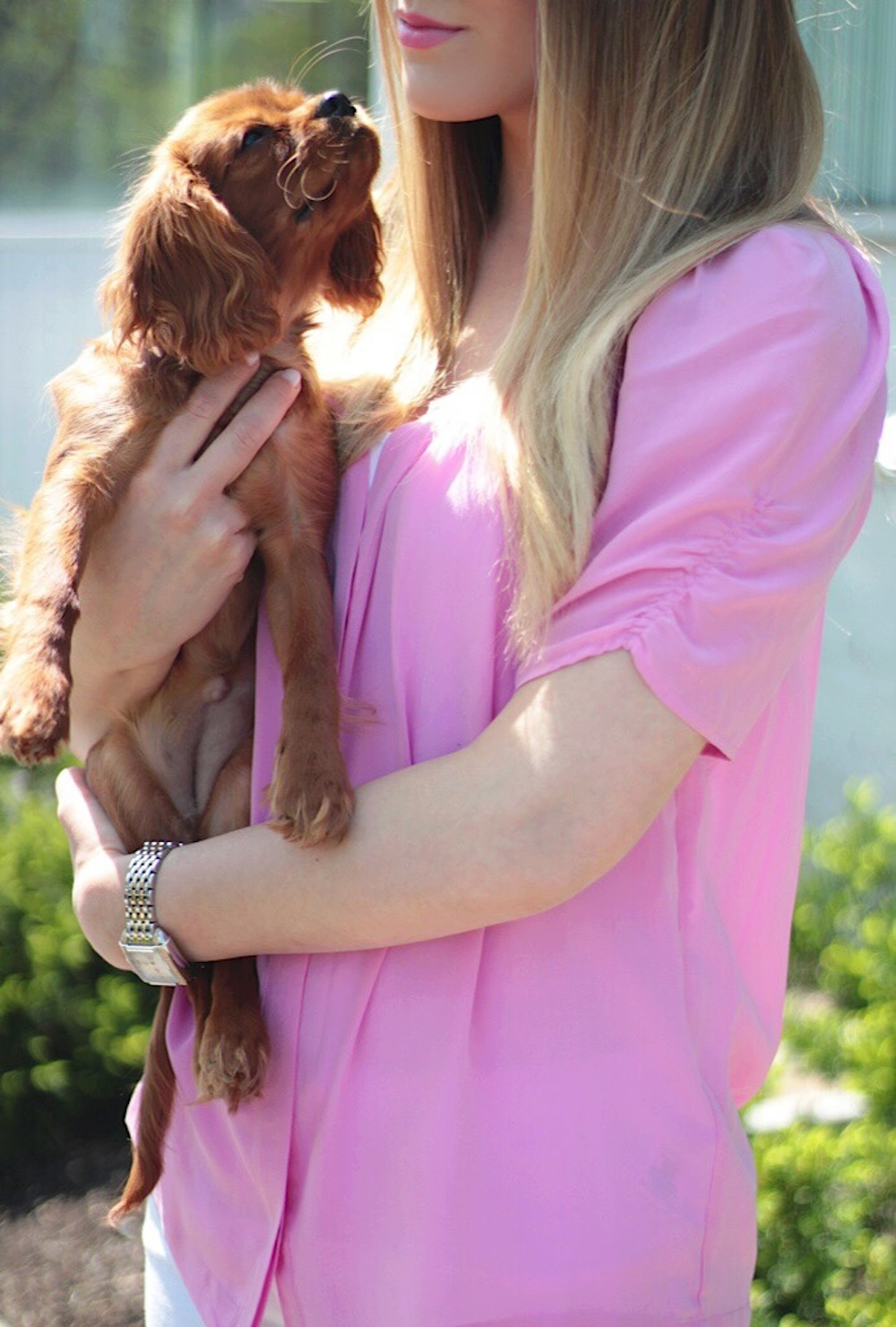 rachel puccetti pink joie top and puppy