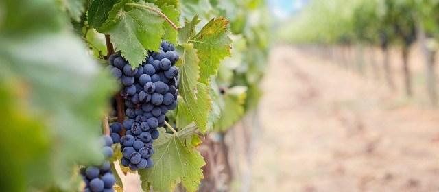 Arizona Wine Country: Charron Vineyards
