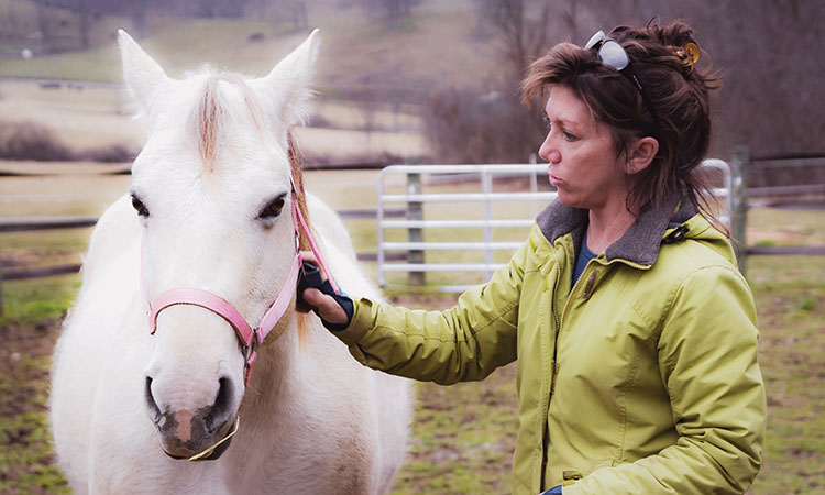 Hope for Horses is an equine rescue, rehabilitation, and adoption organization that covers all of Western North Carolina