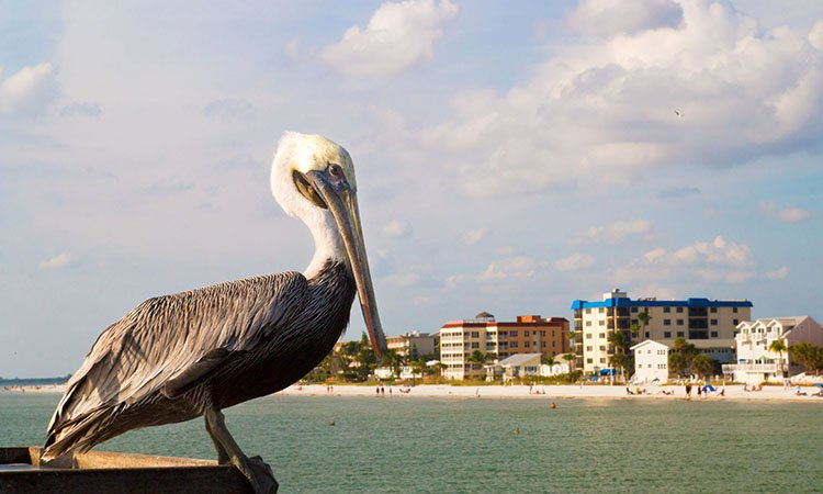 Fly direct from Asheville, NC to Ft. Myers, FL