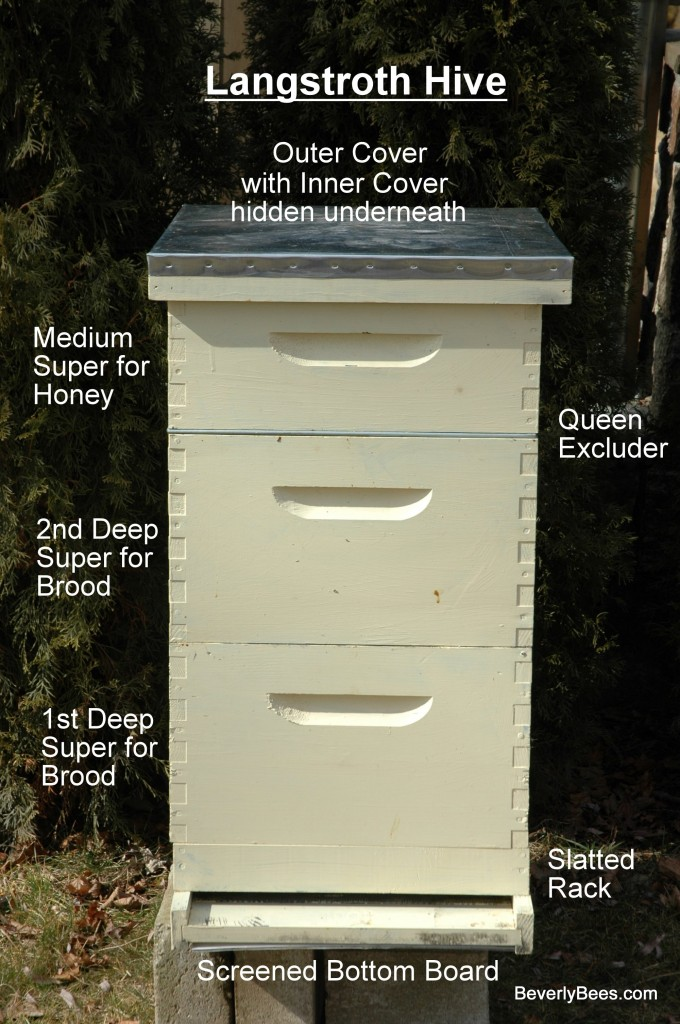 Components Box Beehive