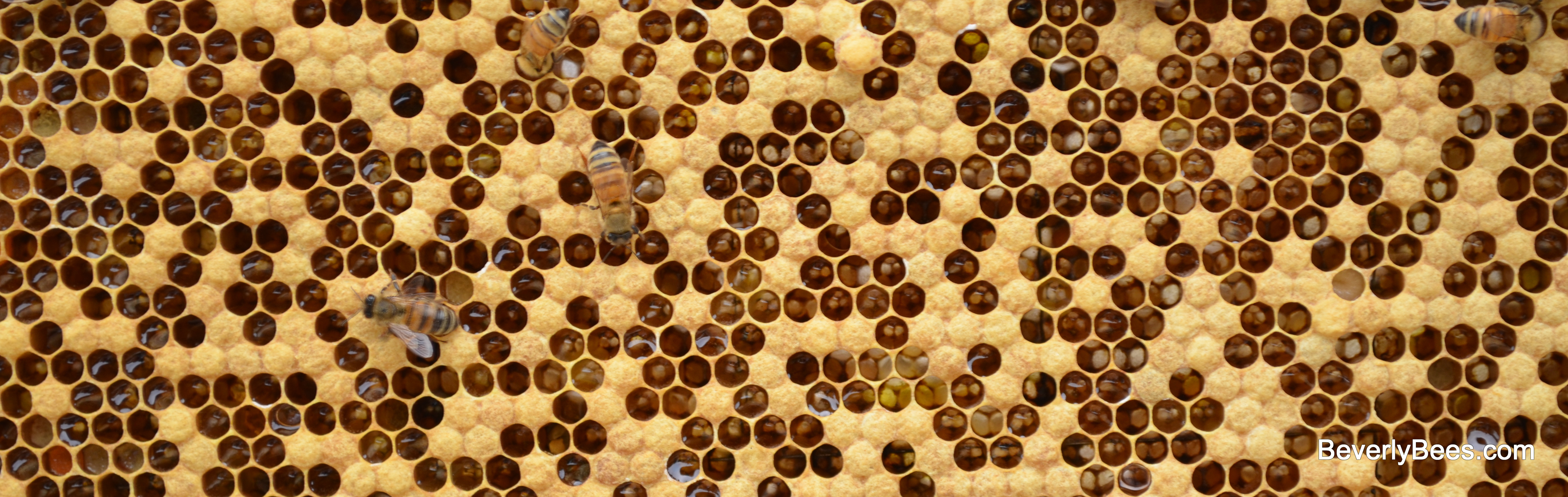 One Honey Bound Hive And One Starving Hive  Beverly Bees
