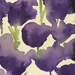 Sketchbook:  Purple Tulips