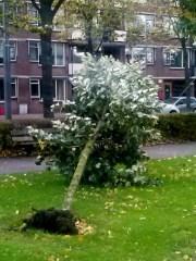 Omgewaaide boom park Schinnenbaan