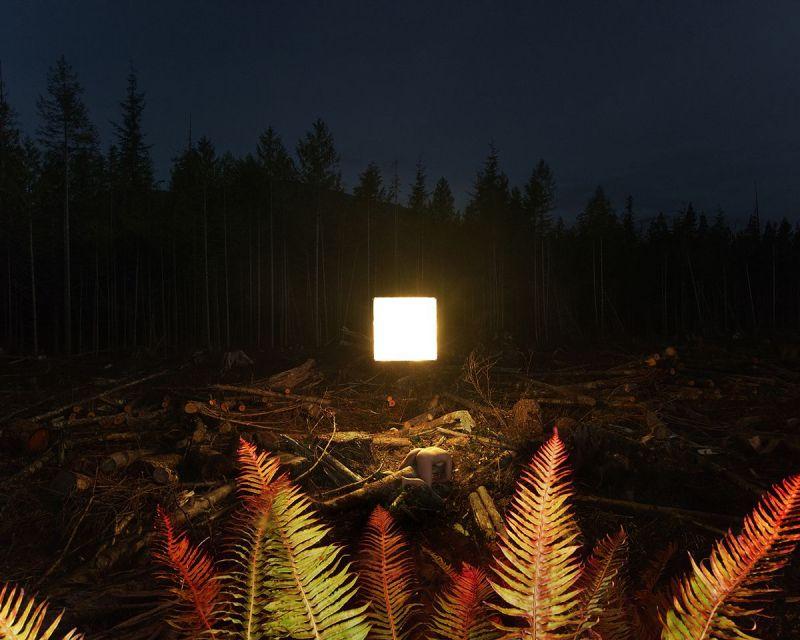 alternative landscape, cleancutting vancouver island forest