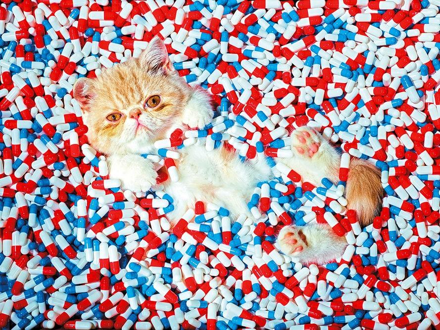 chat et médicament