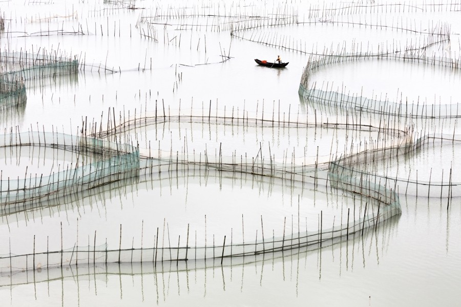 Coastal Geometries Organic - Fujian #17