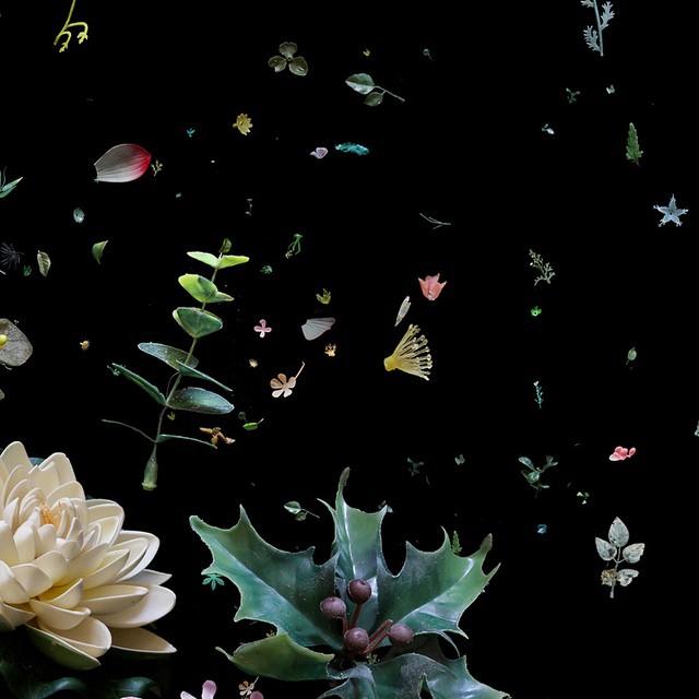 Déchets de la mer, immortalisés par Mandy Barker