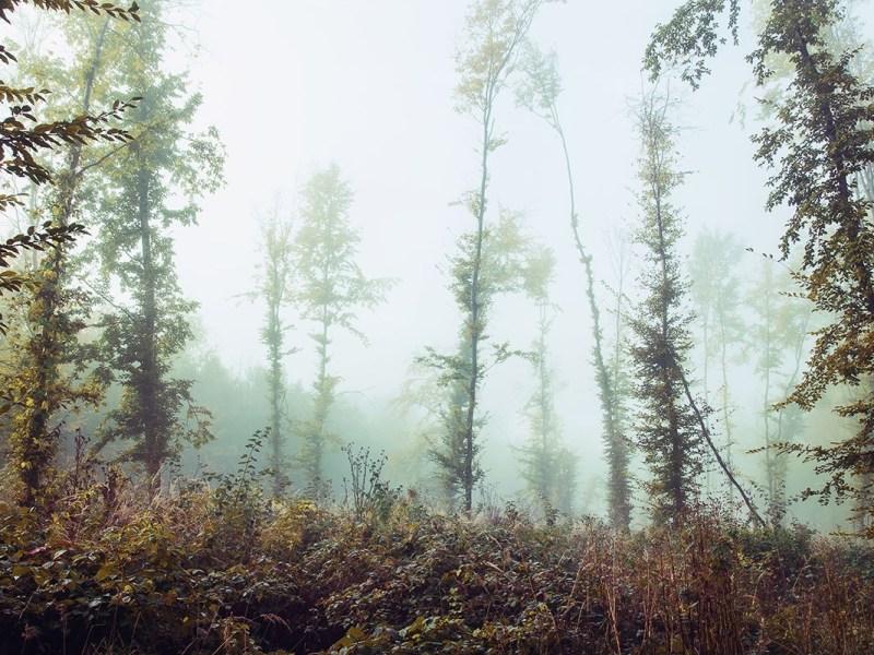 forêt David Scherman nous emporte dans ses voyages