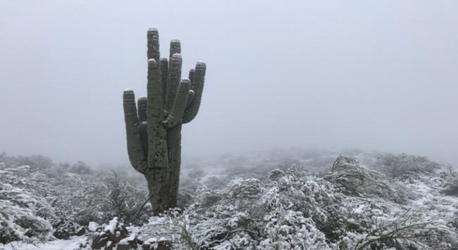 neige arizona