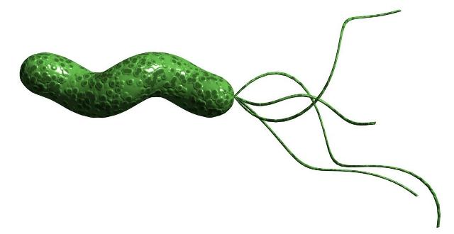 Αποτέλεσμα εικόνας για Campylobacter Pyloridis,.