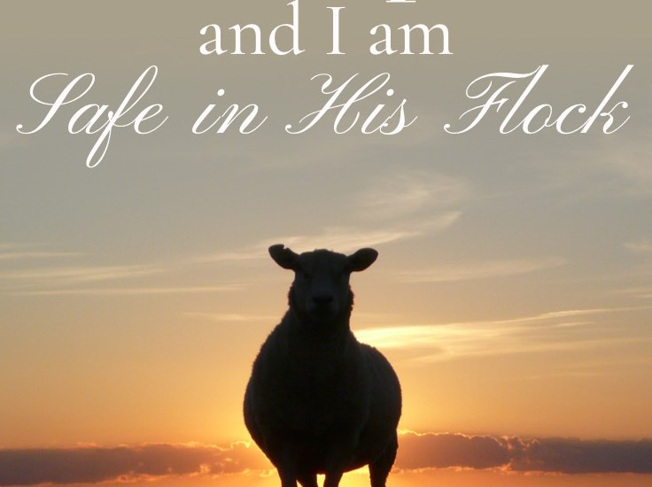 God is the Good Shepherd and I am Safe in His Flock