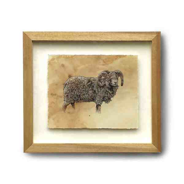 Original pen and ink drawing of a float mounted sheep in a wooden frame sitting on a white background