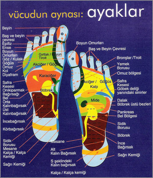 Ayak alti masaj bölümleri
