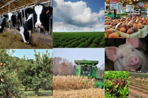 collage of crops