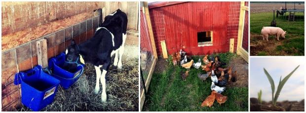Beyer Beware's small farm #FarmSizeDoesntMatter