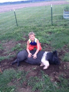 Played with the Pigs