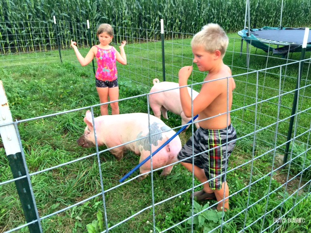 Raising pigs outdoors isn't all it is cracked up to be, but my kids are learning about what it takes to raise animals.