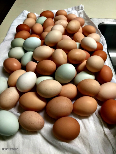 Our eggs, aren't they pretty. The chickens think so too. We lose about 10% of our eggs each day from the chickens cracking them.