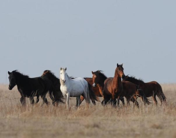 Source: http://www.four-paws.org.uk/projects/horses-2/the-horses-of-letea-master-the-winter/