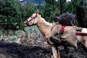 horse-on-the-acatenango-hike