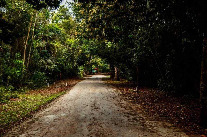 main road in Tikal National Park