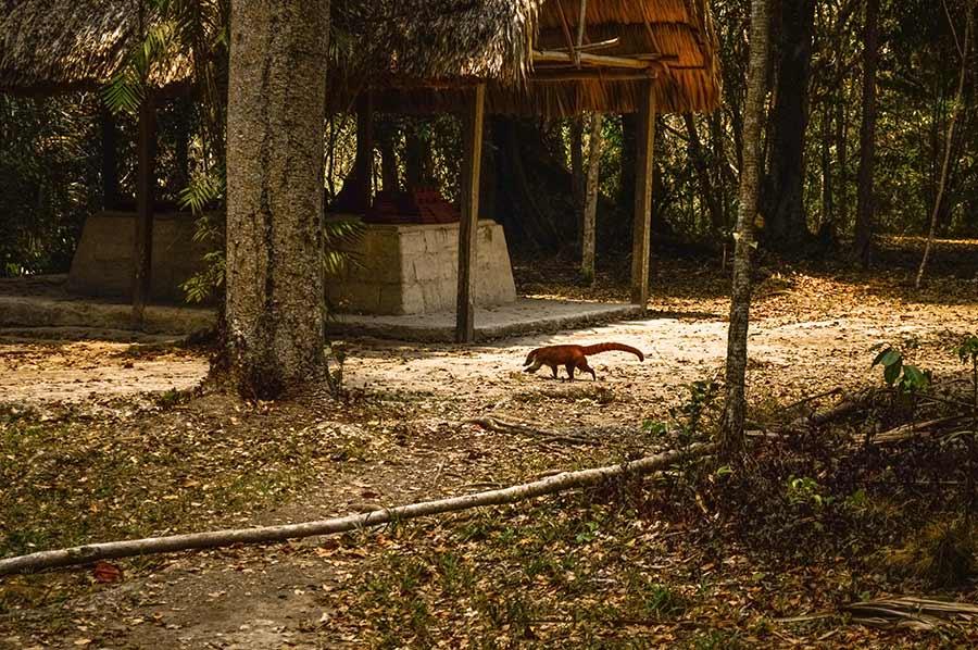tikal-national-park-guatemala-(11)