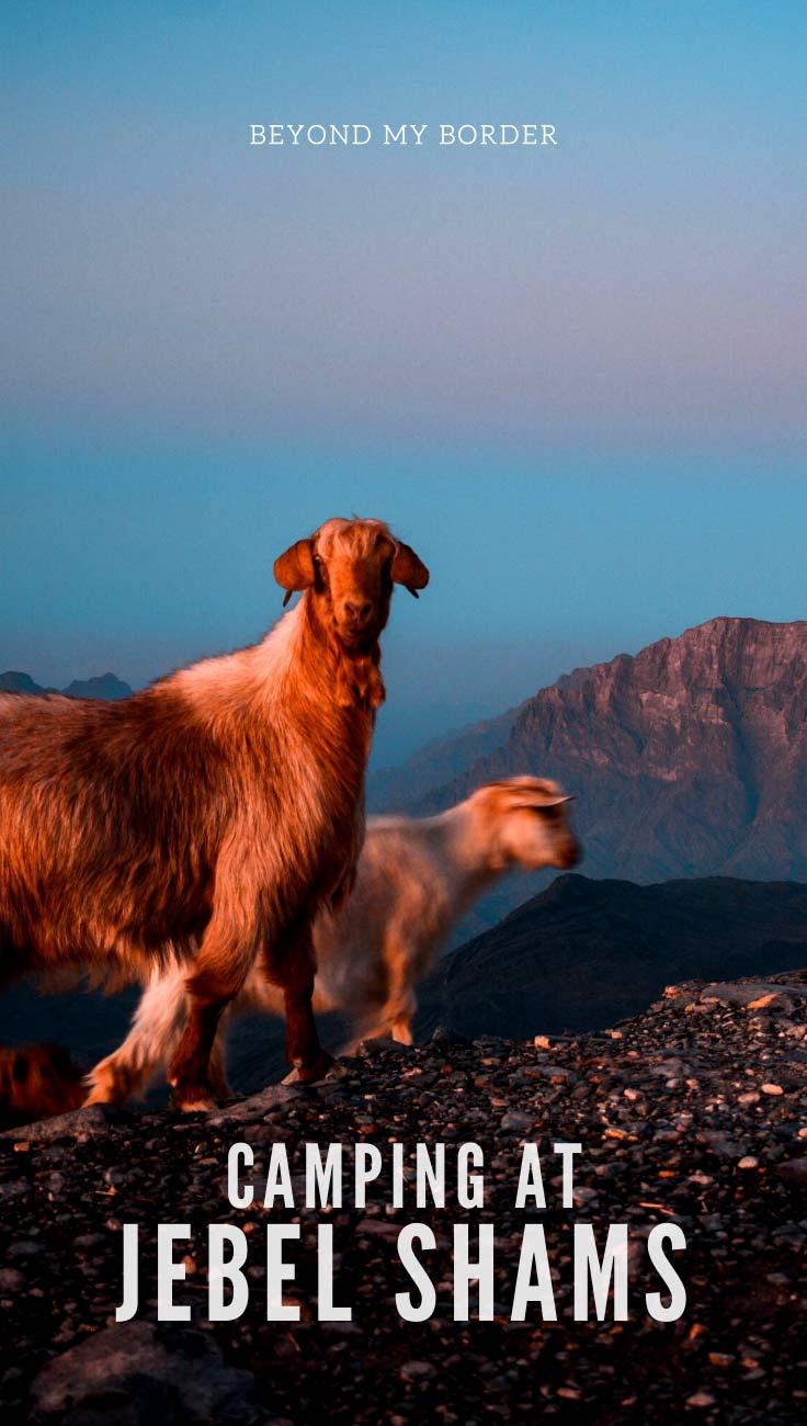 jabal-shams-oman-sheep-in-the-mountains