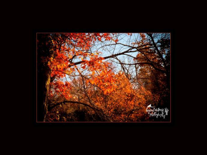 Orange Leaves at Natural Falls State Park