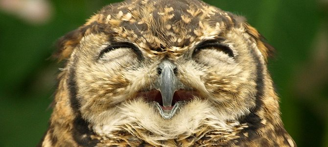 Whooo Wants a Wednesday Smile?