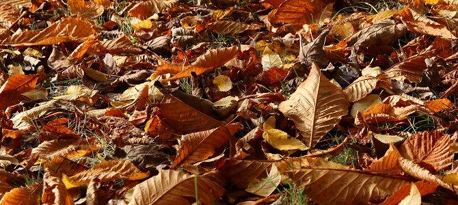 Leave Those Leaves!