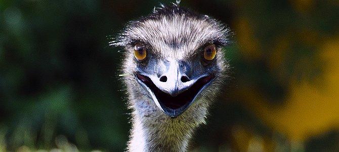 Emu Smiling