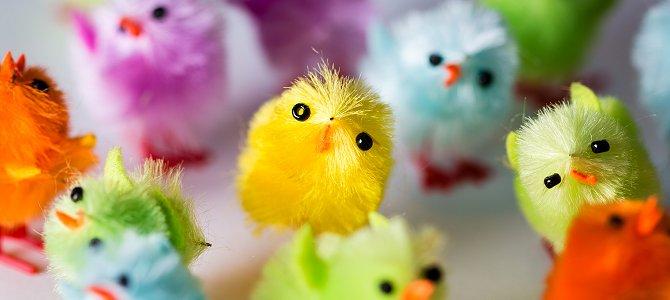 Fun Chicks