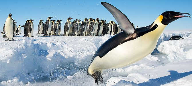 Learn Absolutely Everything About Penguins