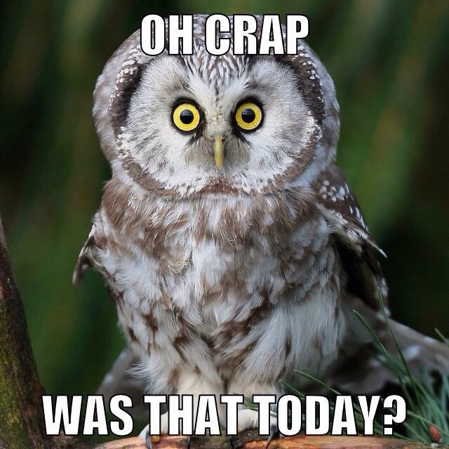 Owl Was That Today