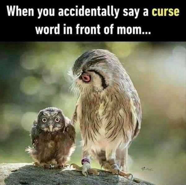 Cursing Owl