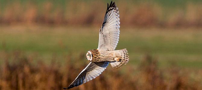 Owl Superstitions – Good or Evil?