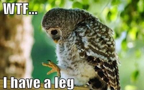 WTF Owl Leg