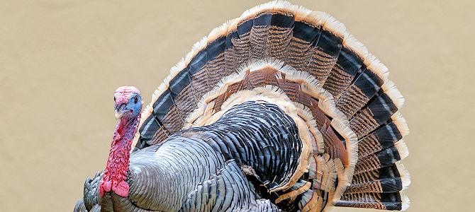 Smile, It's Turkey Time!