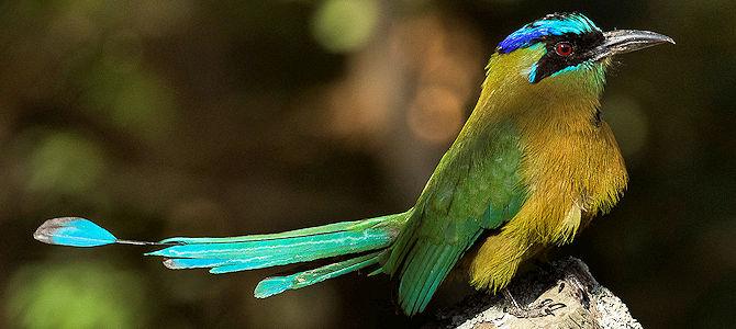 Celebrate Bird Day!