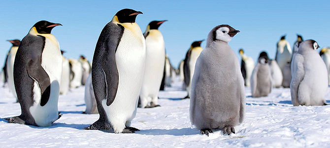 How Aware of Penguins Are You?